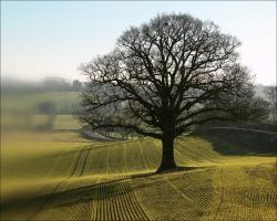 free-natural-wallpaper-tree