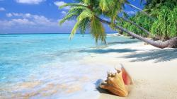 Tropical Background Wallpaper HD Free Download