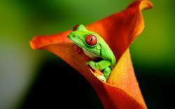 Frog Flower Nature