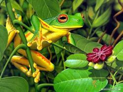 Frogs Frog Wallpaper!