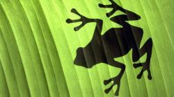 Frog Wallpaper 1920×1080 HD