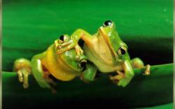 Cute Love Frog Animal Wallpaper 8967 Wallpaper