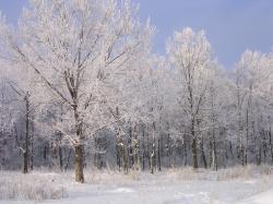 File:Frost-oliv.JPG