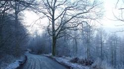 Frosted Road