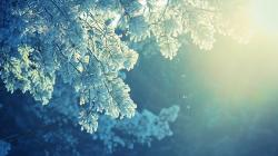 View: Frosted Pine wallpapers and stock photos