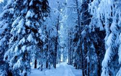 Frozen forest wallpaper 2560x1600 Original ...