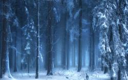 189909 Blue Frozen Forest Wallpaper Hd free image