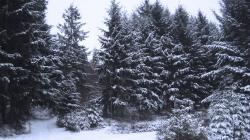 Frozen Forest 34212