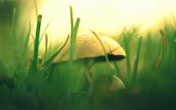 Fungus Grass Nature Photo