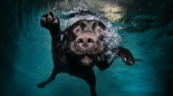 Description: The Wallpaper above is Funny dog diving Wallpaper in Resolution 2560x1440. Choose your Resolution and Download Funny dog diving Wallpaper