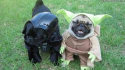 Funny Dog Pictures 25 Desktop Backgrounds