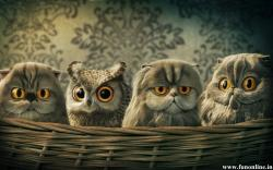 Cartoon Owl Desktop