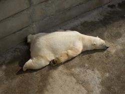 Again Funny Sleeping Animal