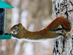 Funny Squirrel The Free
