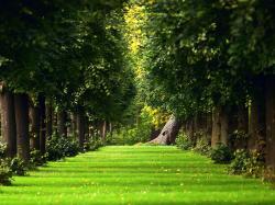 Beautiful Green Garden Desktop Wallpaper