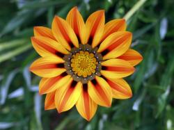 photo Orange-Gazania-Flower-1-1024x768.jpg