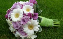 Gerberas Roses