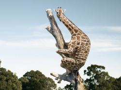 Gina The Giraffe is January's Monthly Collectible [Archive] - SmallWorlds Forum