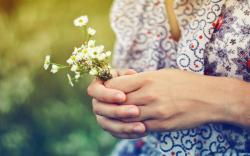 Girl Hands Daisy Flowers Summer Mood