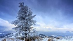 Gorgeous Fir Tree Wallpaper