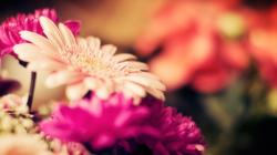 Gorgeous Flower Macro Wallpaper