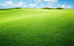 Grasslands Background