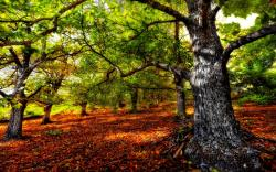 Beautiful Forest Hdr wallpaper