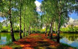 Gorgeous Spring Forest Wallpaper 13448