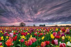 25 Gorgeous Photos of Spring Wildflowers - Sunset Over Tulip Field, Woodburn, Oregon,