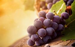 Fruit Grapes Wallpaper Desktop HD Image