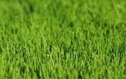... Grass Wallpaper; Grass Wallpaper HD