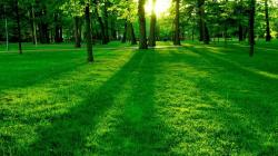 nature grass 1920×1200 | Grass Wallpapers and Background