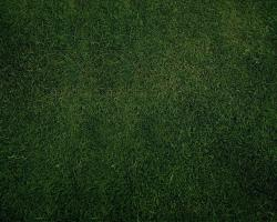 1280x1024 Green Grass Background