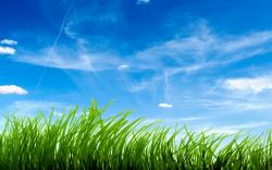 green-grass-clear-sky-background