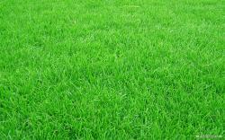 ... Grass-Background.2.jpg