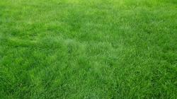 2048x1152 Wallpaper grain, grass, field, green