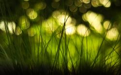 Green Grass Bokeh