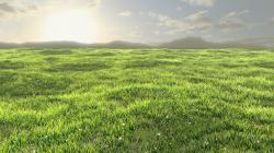 super grass field pictures