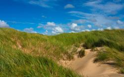 Grass sand dunes