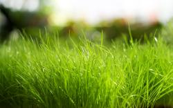 grass sunlight macro wallpaper background