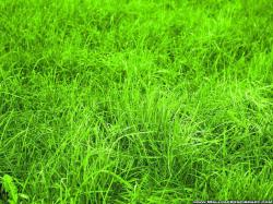 ... green-grass-hd-wallpapers ...