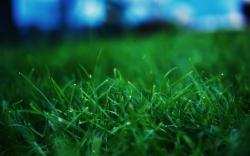 Diablo 3 Wallpaper; Grass Wallpapers ...