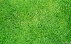 Grass Wallpaper 03
