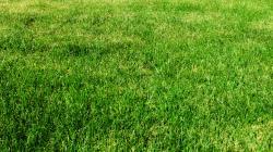 Grass; Grass ...