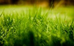 Grass Water Drops Nature