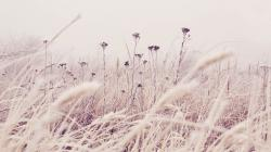 Grass Frost Snow Nature Winter