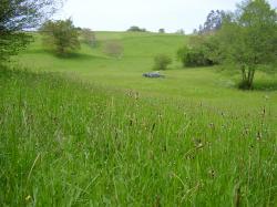 Grassland in Cantabria, northern Spain.