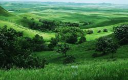 Grasslands Wallpaper 39651 1920x1200 px