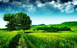 Green Fields Landscape