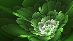 Green flowers hd wallpapers